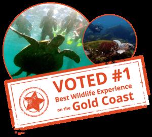 Snorkel with the turtles gold coast tweed heads