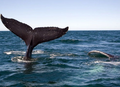 whale watching tours gold coast