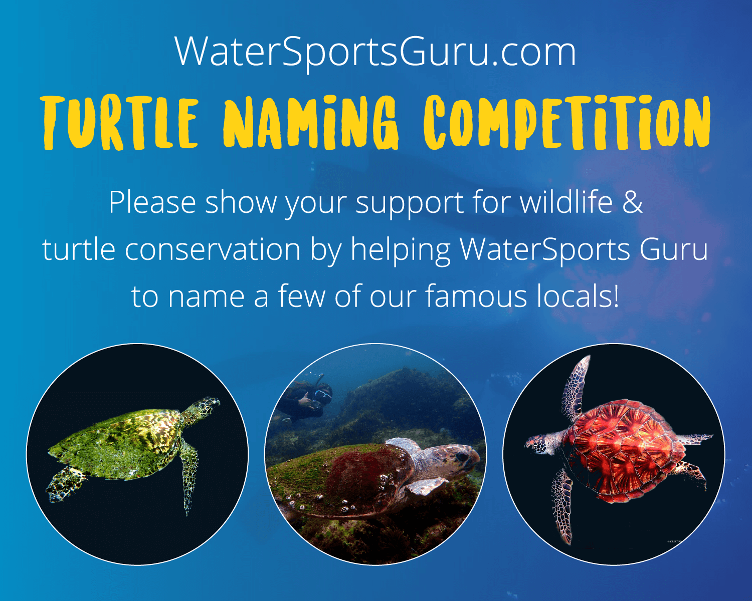 Turtle Naming Competition