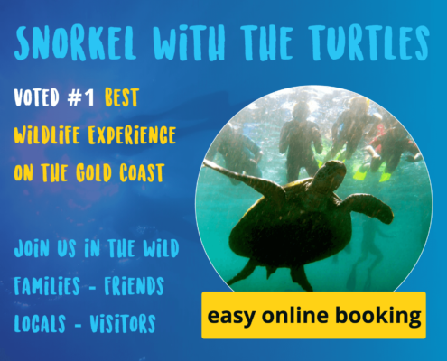 Snorkel with the Turtles Gold Coast