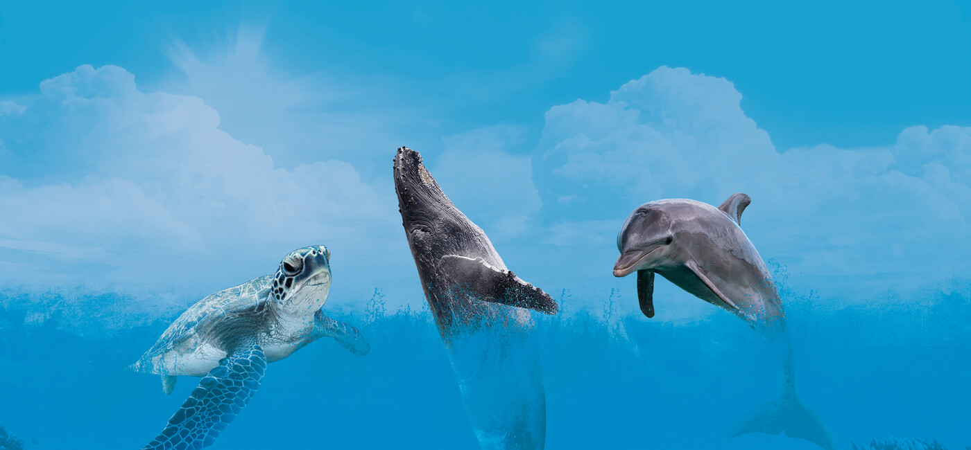 The Big 3 of the Sea with Watersports Guru Gold Coast Whale Watching Turtles and dolphins